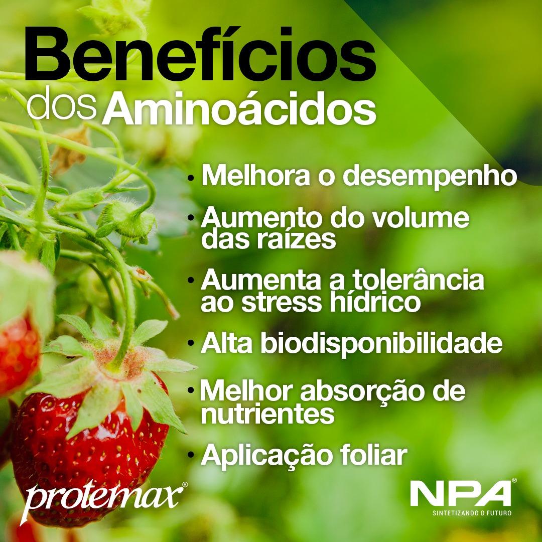 Os benefícios dos aminoácidos no campo